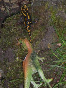 Dinosaurier und Feuersalamander in Bad Urach? Man muss nur dran glauben!