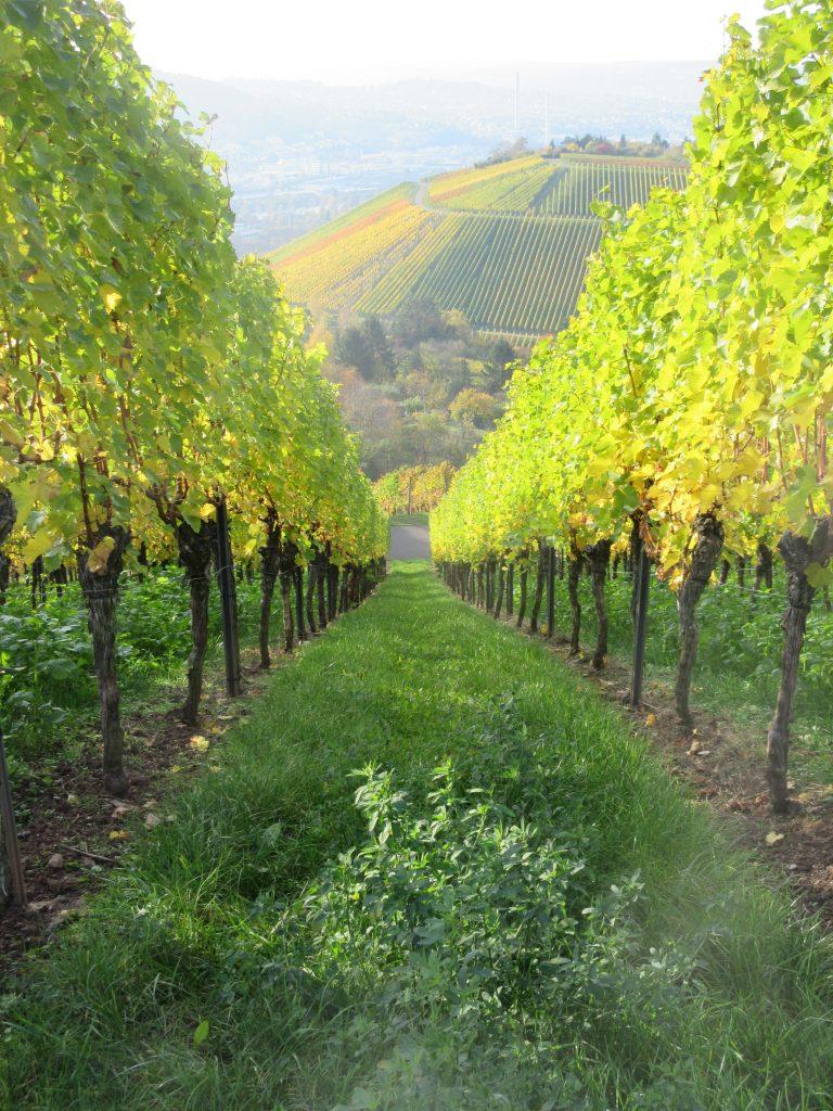 Einem steilen Anstieg folgt beim wandern oft auch ein steiler Abstieg: auch auf dem Württemberg!