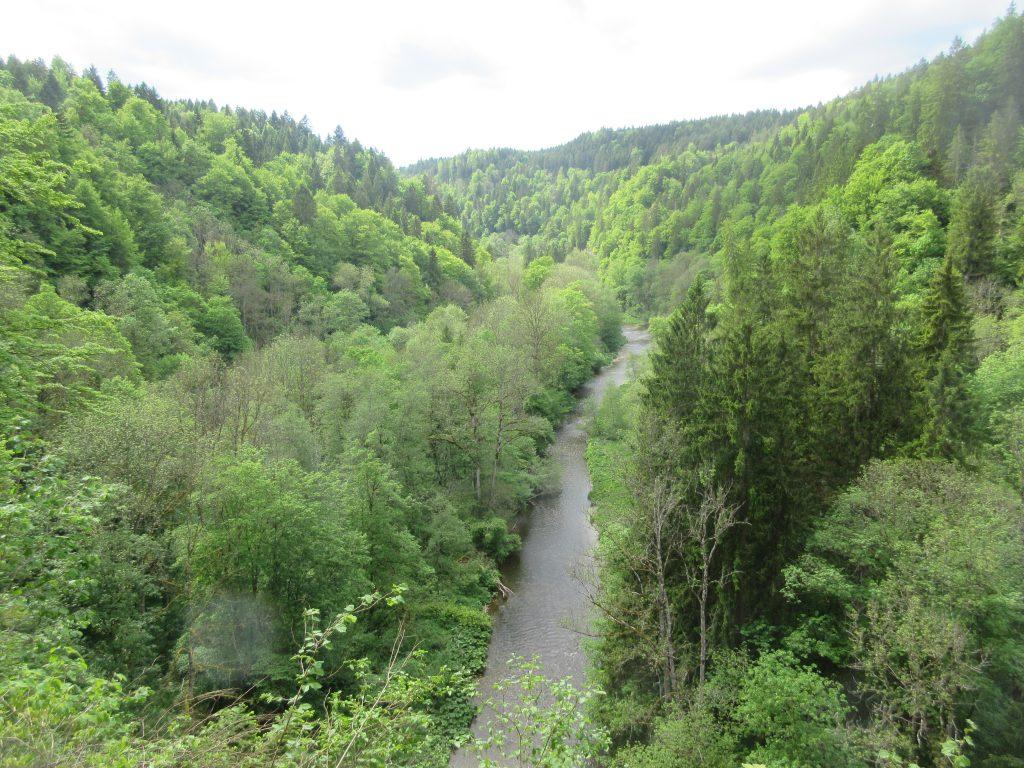 Mitten im Wald und ohne Handy-Empfang: mitten in der Wutachschlucht unterwegs!