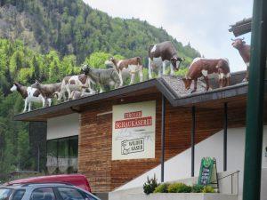 Mhhm lecker. Die Tiroler Schaukäserei in Kirchdorf lädt zu einer Rast ein