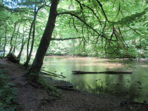 Ruhe und Natur pur und: kein Internetempfang beim Wandern in der Wutachschlucht!