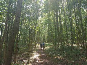 Bei fast 30 Grad Höchsttemperatur wird jedes schattige Waldstück auf der Felsenrunde dankend angenommen