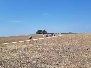 Auch wenn es so aussieht: unser 35köpfige Wandergruppe hat auf der Felsenrunde trotz einiger kleiner Pausen immer wieder zusammen gefunden!