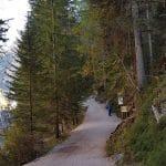 Hohe Tannen weisen die Strecke zur Wanderung rund um den Pragser Wildsee