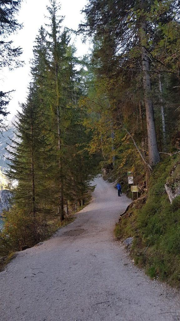 Hohe Tannen weisen die Strecke einmal rund um den traumhaften Bergsee!