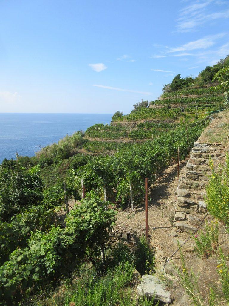 Wanderwege in der Cinque Terre führen direkt an der Küste entlang.