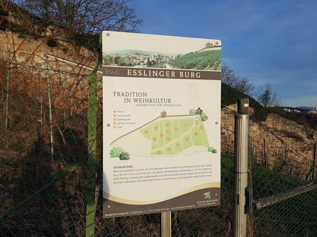 Tatsächlich gibt es an der Burg Esslingen sogar einen eigenen Weinberg!