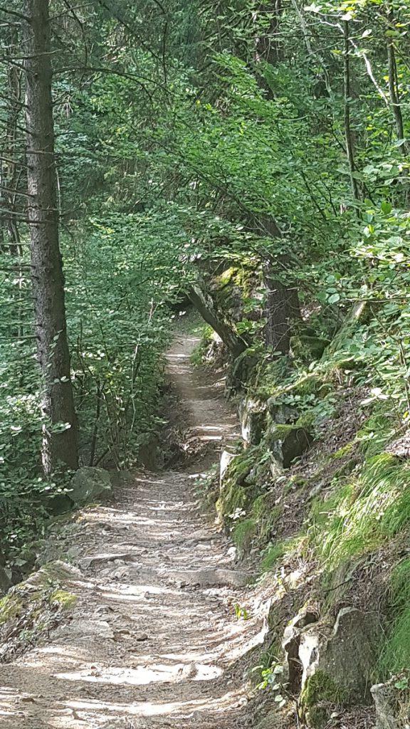 Schön schattig lässt es sich auf dem angenehmen zu laufenden Waldweg gen Partschins wandern!