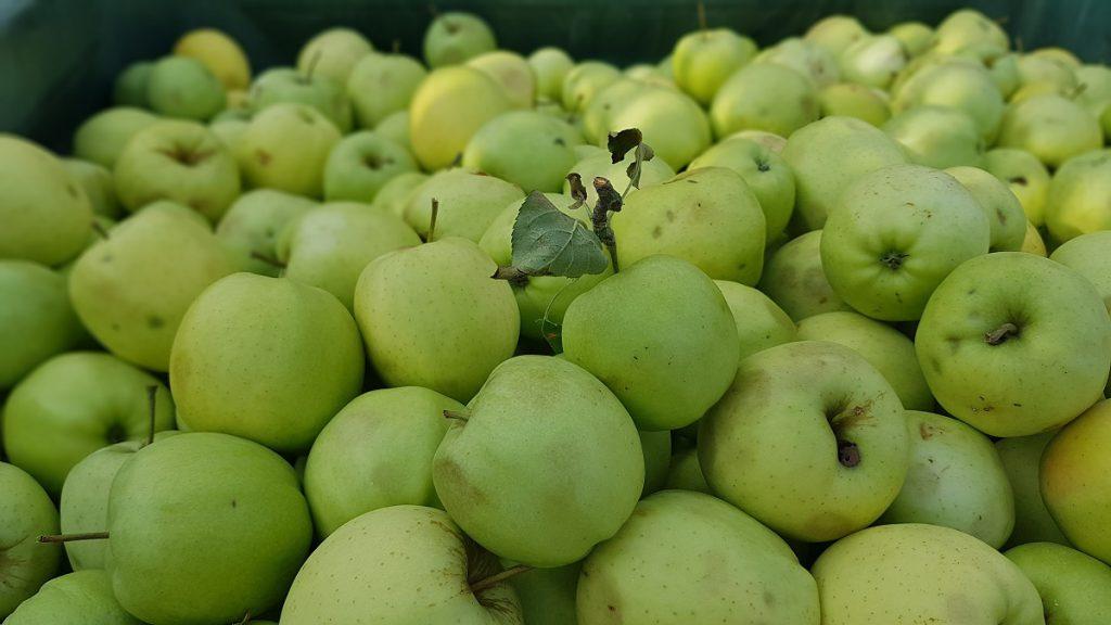Oder lieber grüne Äpfel, welche bevorzugt ihr?
