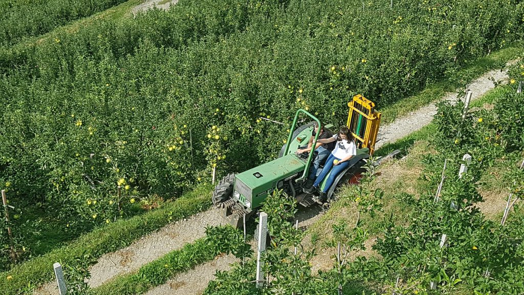 Das Meraner Land ist für seine riesigen Apfelplantagen bekannt; halb Europa wird von hier aus mit Äpfeln versorgt!
