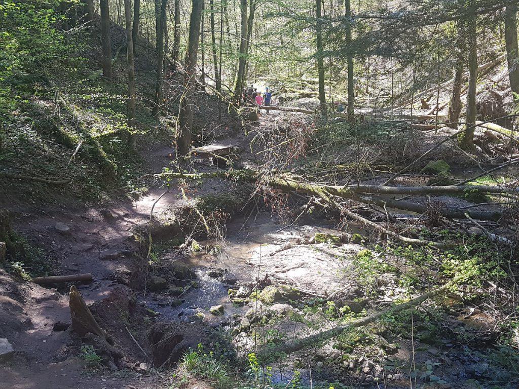 2km wandern wir nun über Stock und Stein am Hörschbach in der Hörschbachschlucht entlang. Ein Traum!