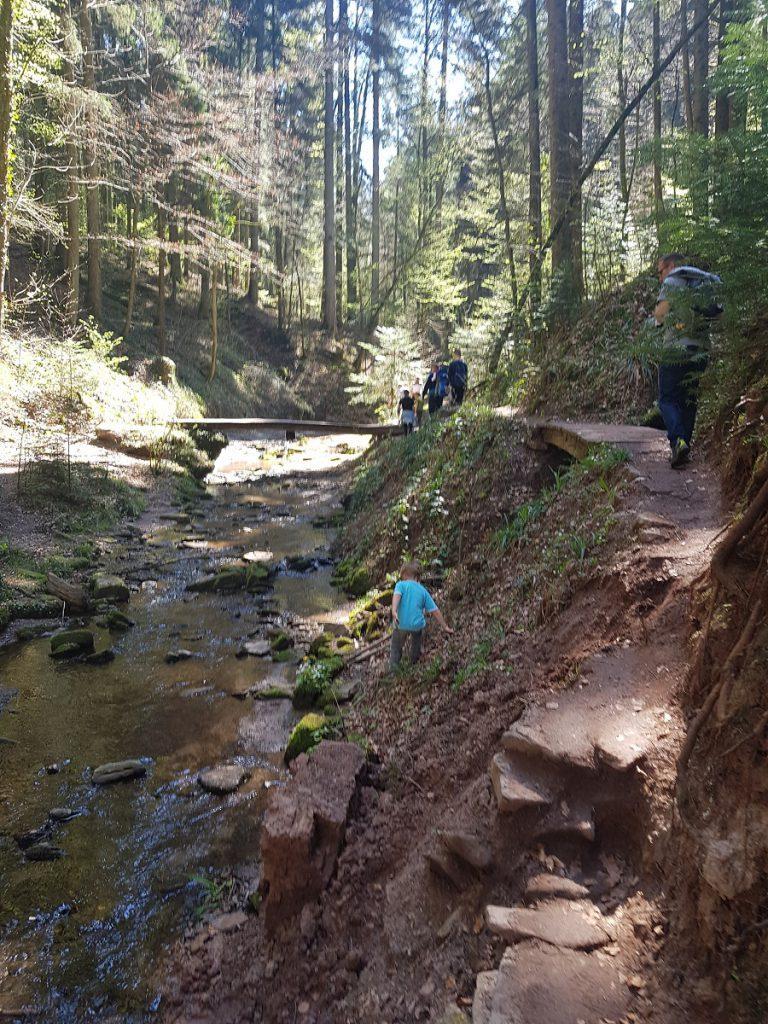 Mitten in der Hörschbachschlucht wandern wir immer weiter am Wasser entlang. Wem die Tour noch nicht interessant genug erscheint, geht einfach direkt durch den Hörschbach!