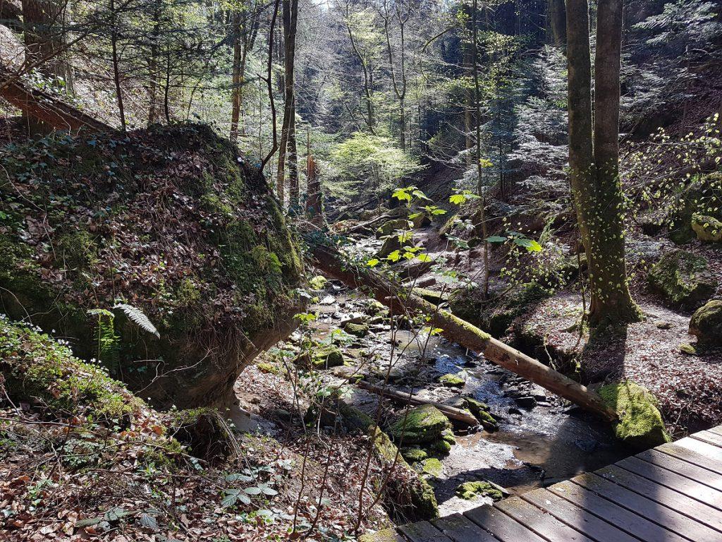 Waldwandern wie es im Buche steht. Wir fühlen uns wie mitten im Schwarzwald, sind aber im Schwäbischen Wald bei Murrhardt!