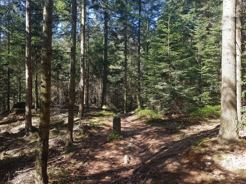 Jetzt wird es wieder schattig: wir wandern weiter Richtung Murrhardt durch den Wald!