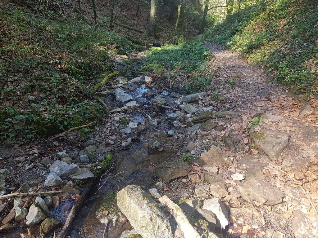 Und nochmal wandern wir direkt an einem Bach entlang bergab Richtung Murrhardt!