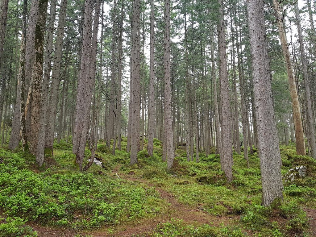 Allgäu Wald