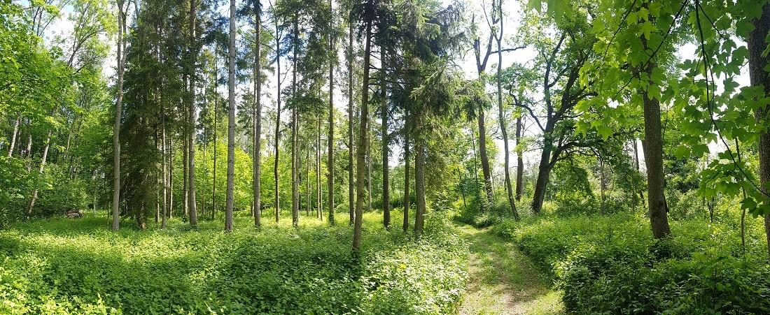 Donauwald Wanderweg