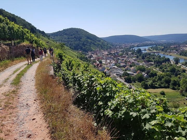 Wanderer zwischen den Weinbergen in Churfranken am Main