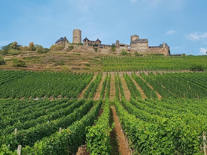 Weinberge vor Burg Thurant