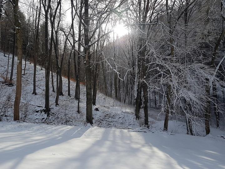 Verschneiter Wald und Wiese