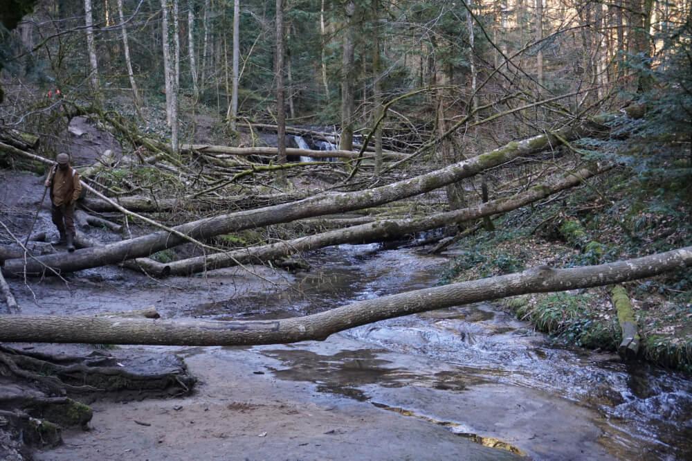 Umgefallene Baumstämme in der Schlucht
