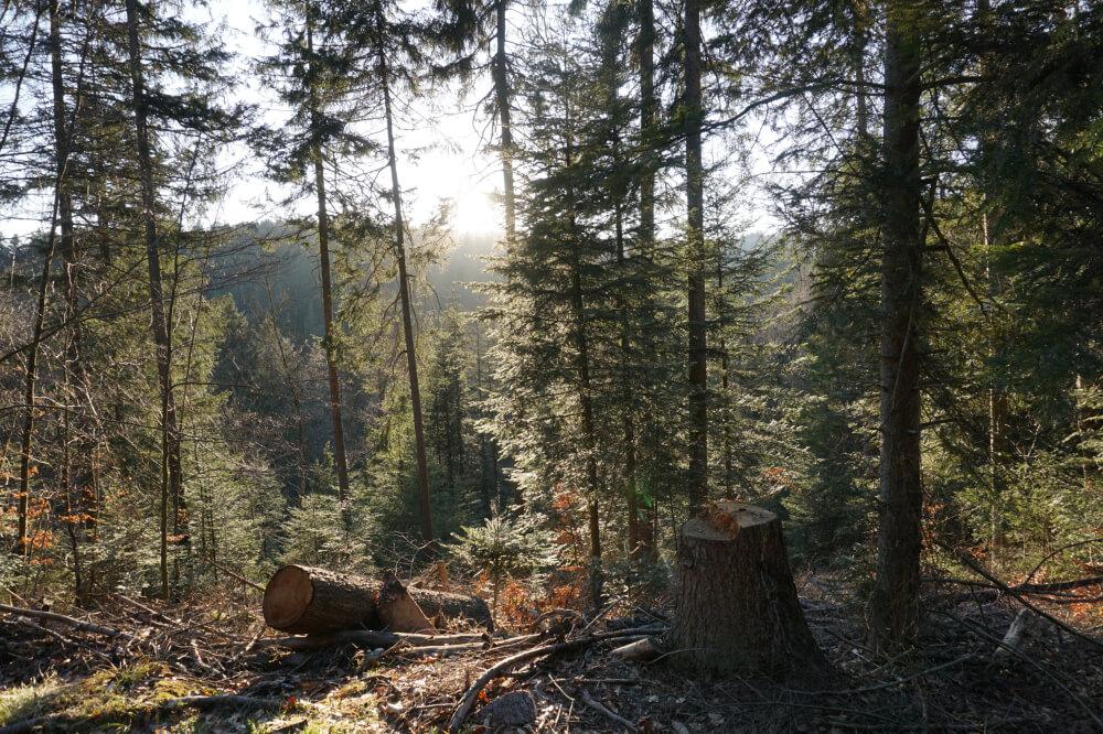 Aussicht durch den Schwäbischen Wald