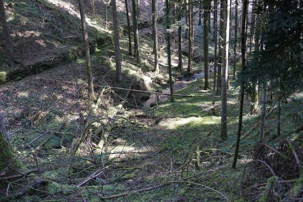 Blick in die Rötenbachschlucht