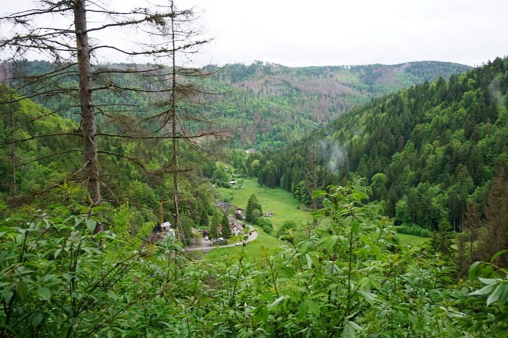 Aussicht grüne Bäume