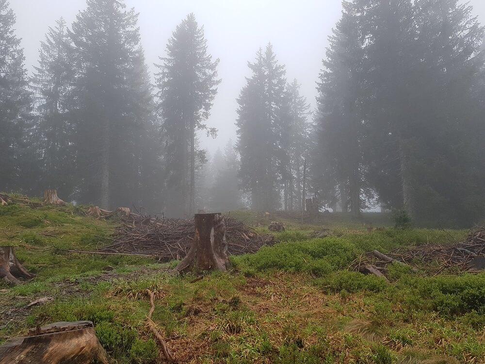 mystischer Nebel