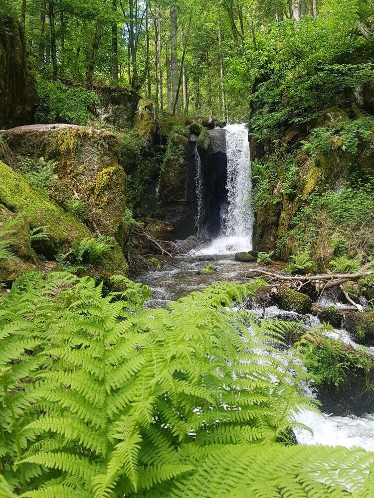 Wasserfall mit Farnen