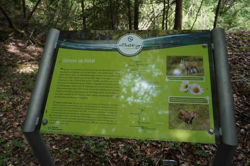 Hinsweistafel Gämse im Schwarzwald