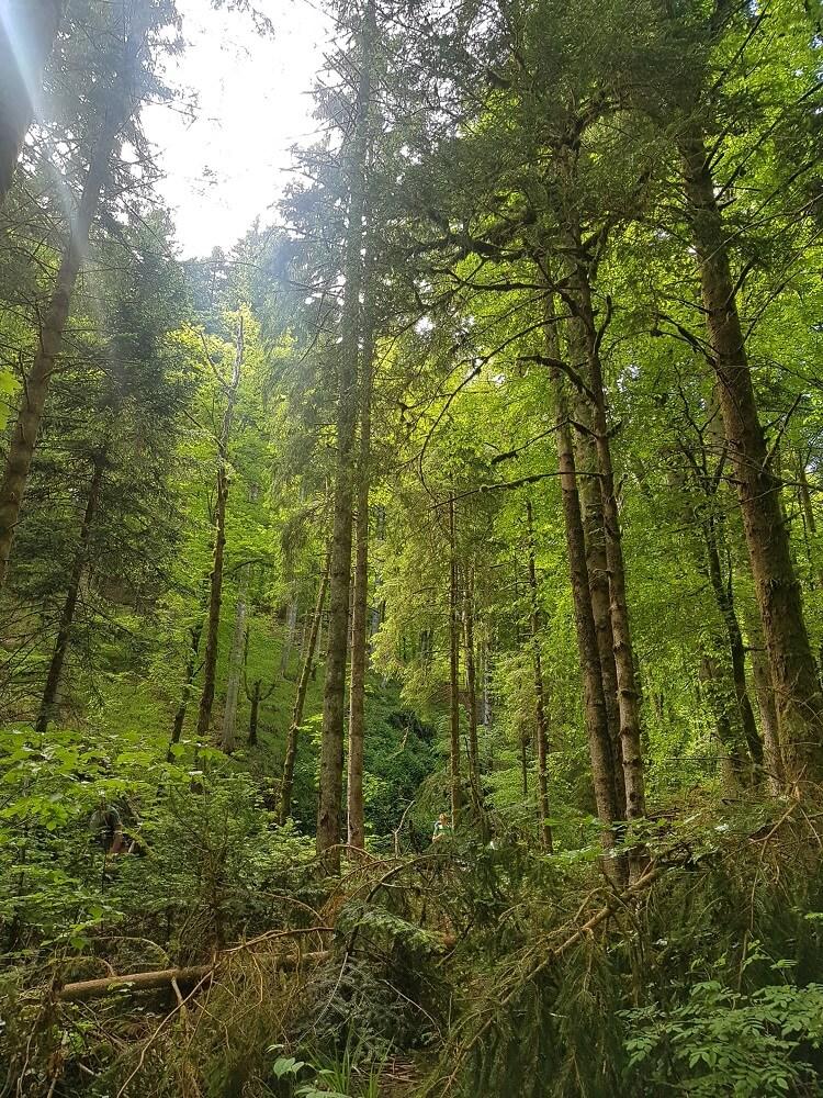 Bäume auf dem Wanderweg