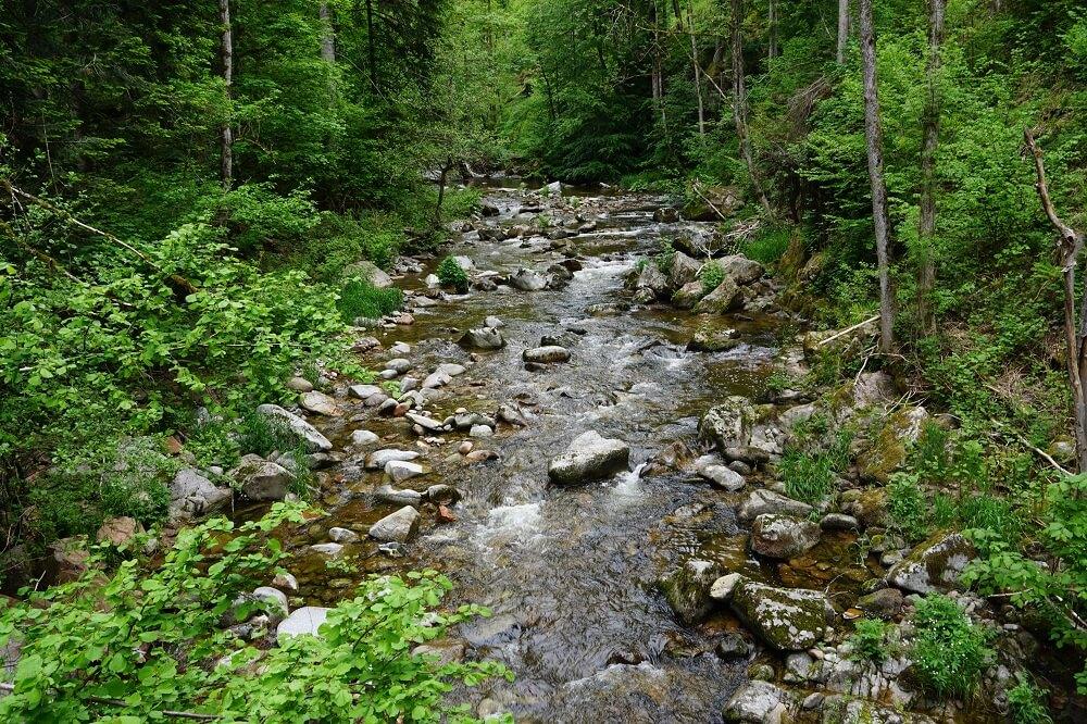 Fluß und grüne Bäume