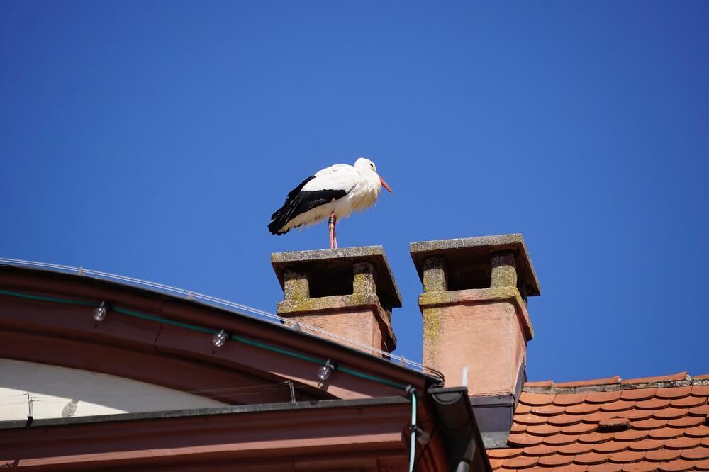 Storch auf Dach in Bad Mergentheim