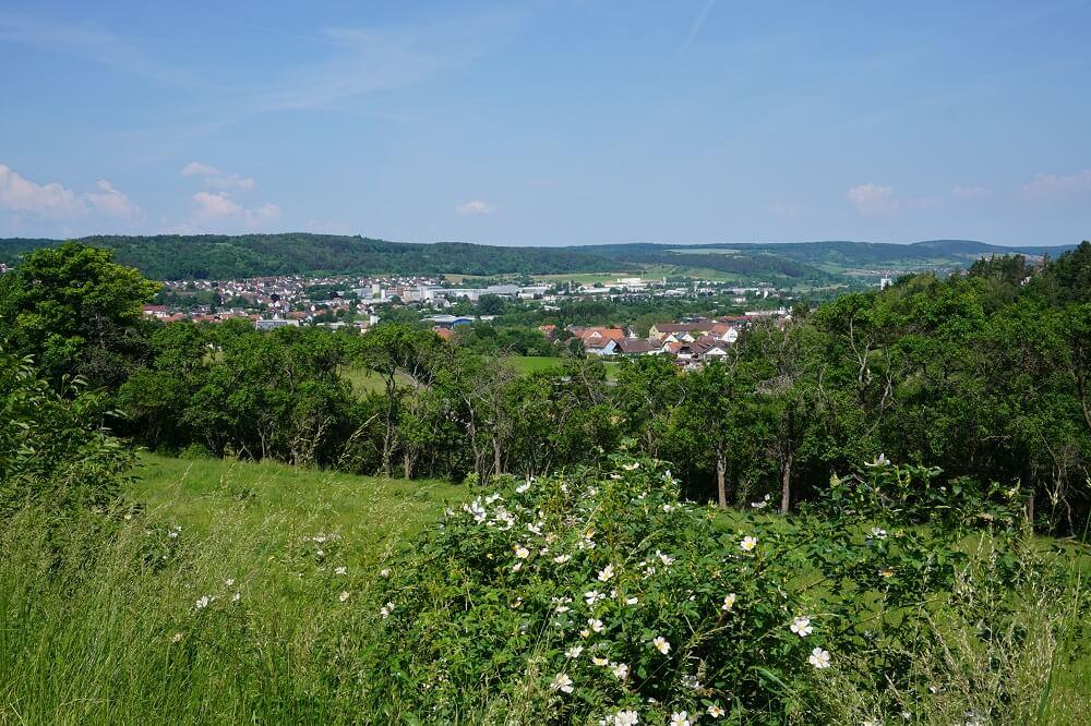 Wiese in Tauberbischofsheim